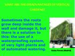what are the disadvantages of vertical gardens