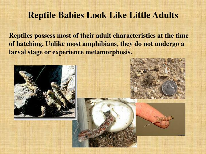 Reptile Babies Look Like Little Adults