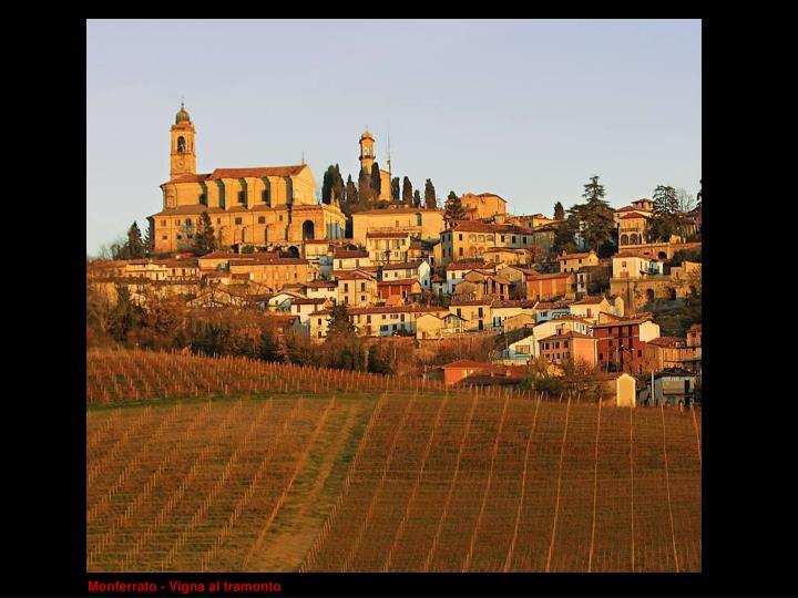 Monferrato - Vigna al tramonto