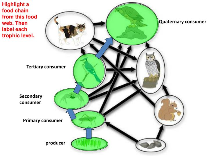 Highlight a food chain from this food web. Then label each trophic level.