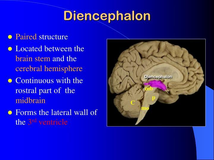 PPT - DIENCEPHALON PowerPoint Presentation - ID:2999935