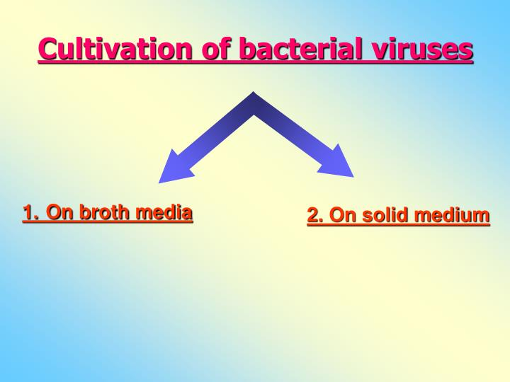 Cultivation of bacterial viruses
