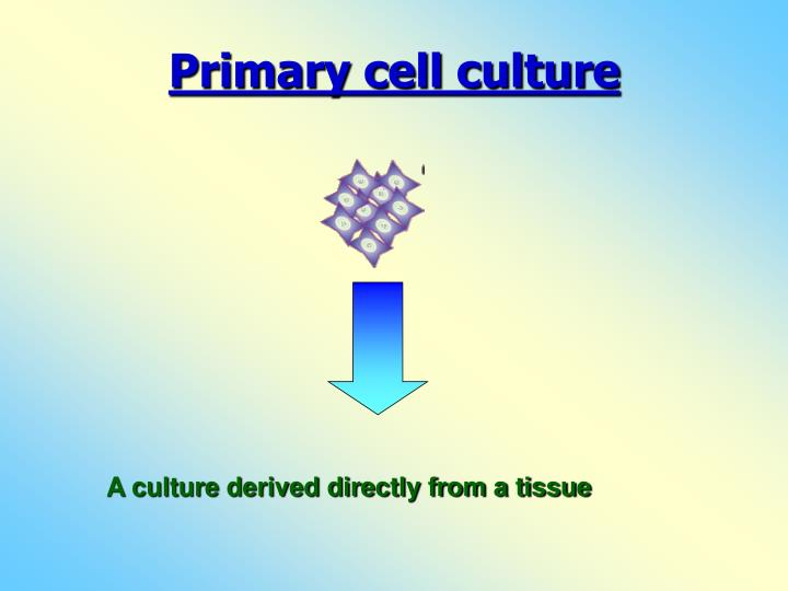 Primary cell culture