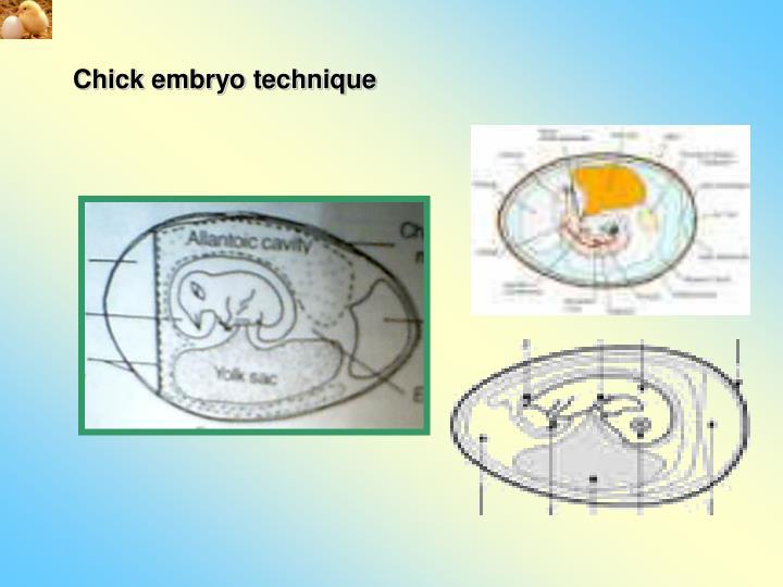 Chick embryo technique