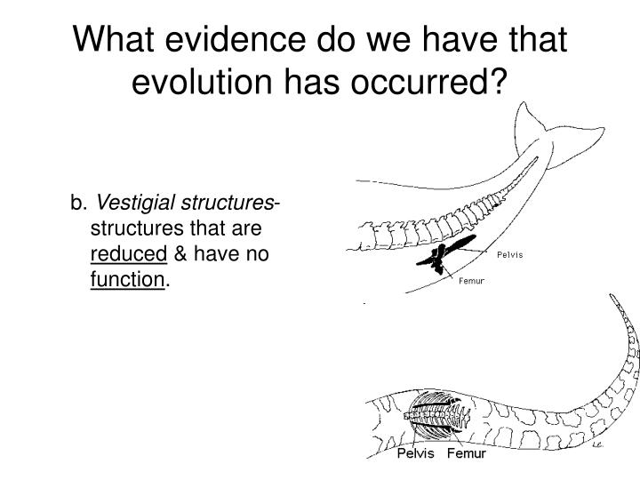 the debate about how evolution occurred and proof of evolution The creation museum hosted a debate on evolution versus  it did occur  to me when you had my old friend larry king up.