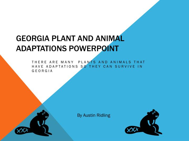 georgia plant and animal adaptations powerpoint n.