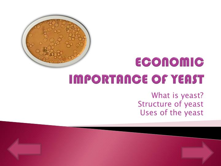 Ppt economic importance of yeast powerpoint presentation id economic importance of yeast toneelgroepblik Images