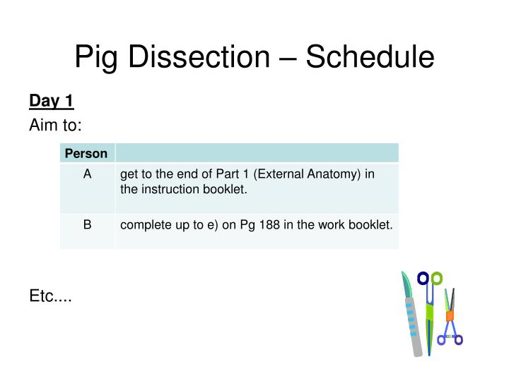 Pig Dissection – Schedule