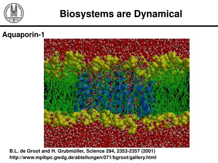 Biosystems are Dynamical