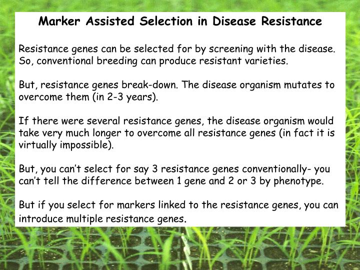 Marker Assisted Selection in Disease Resistance
