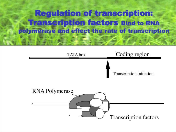 Regulation of transcription: