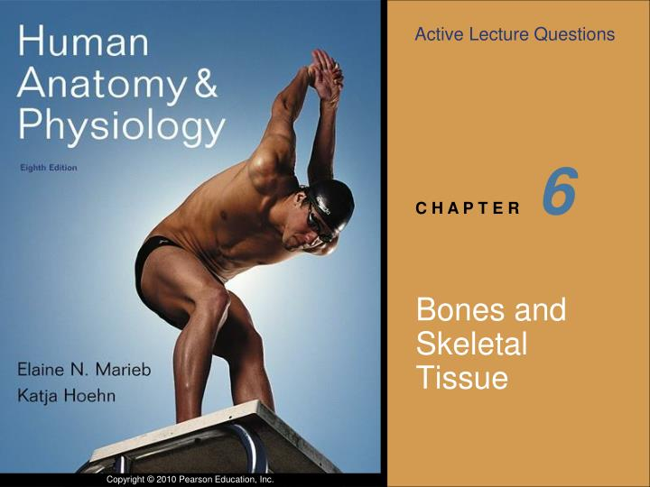 PPT Bones And Skeletal Tissue PowerPoint Presentation ID