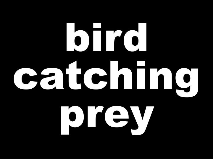 bird catching prey