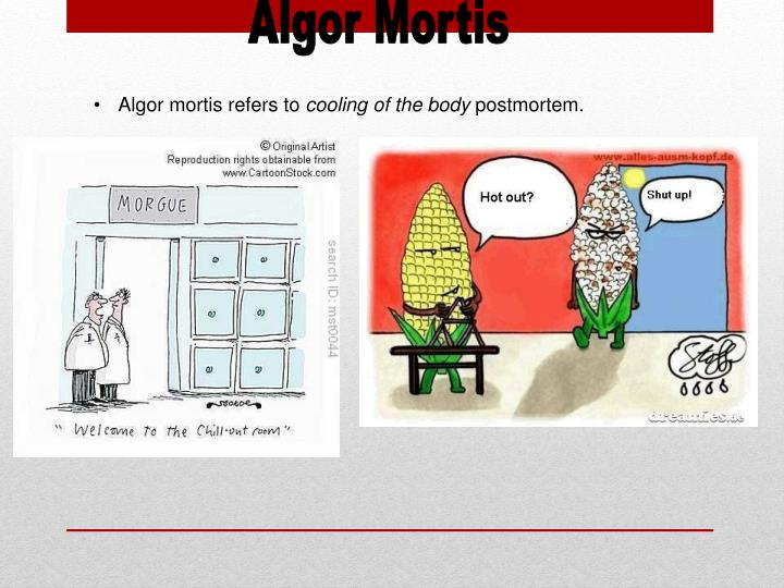 ppt - post mortem interval powerpoint presentation