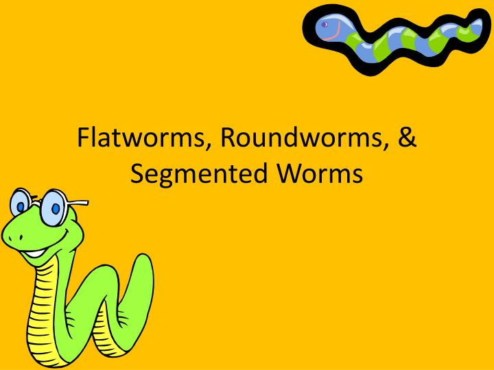 Ppt Flatworms Roundworms Segmented Worms Powerpoint