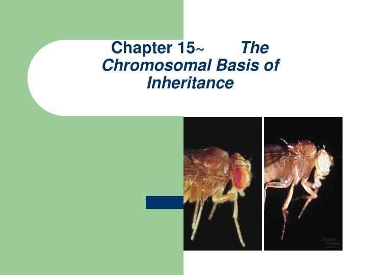 chapter 15 the chromosomal basis of inheritance n.