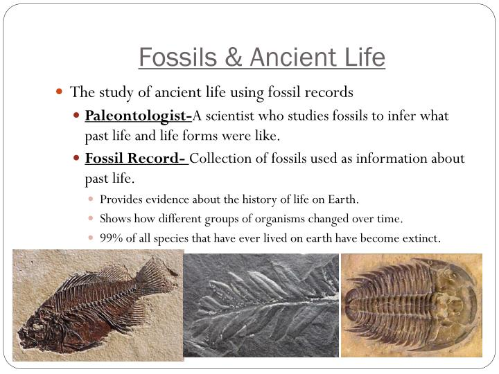 Fossils ancient life