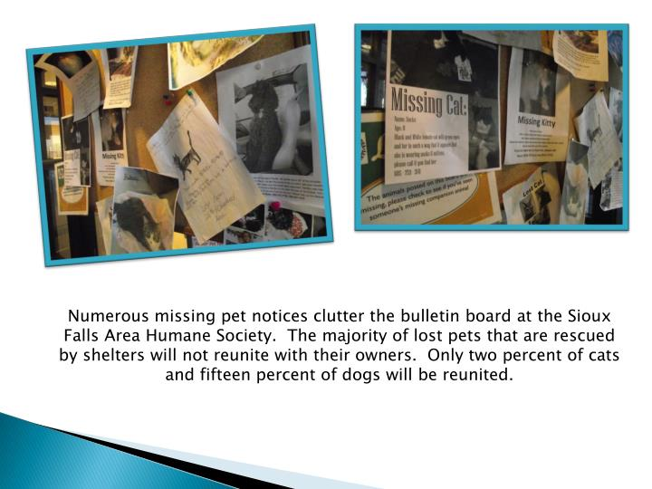 Numerous missing pet notices clutter the bulletin board