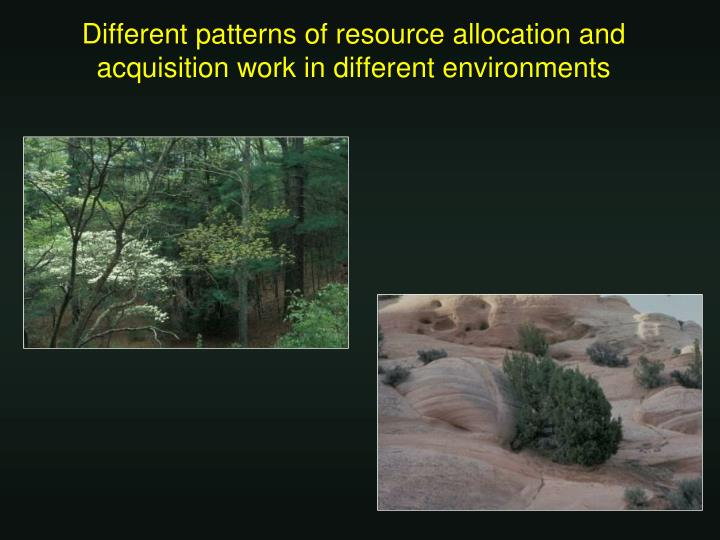 Different patterns of resource allocation and acquisition work in different environments