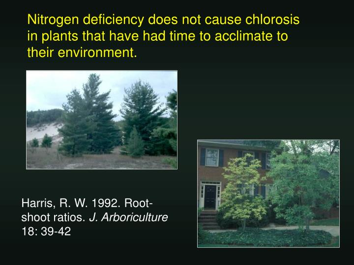 Nitrogen deficiency does not cause chlorosis