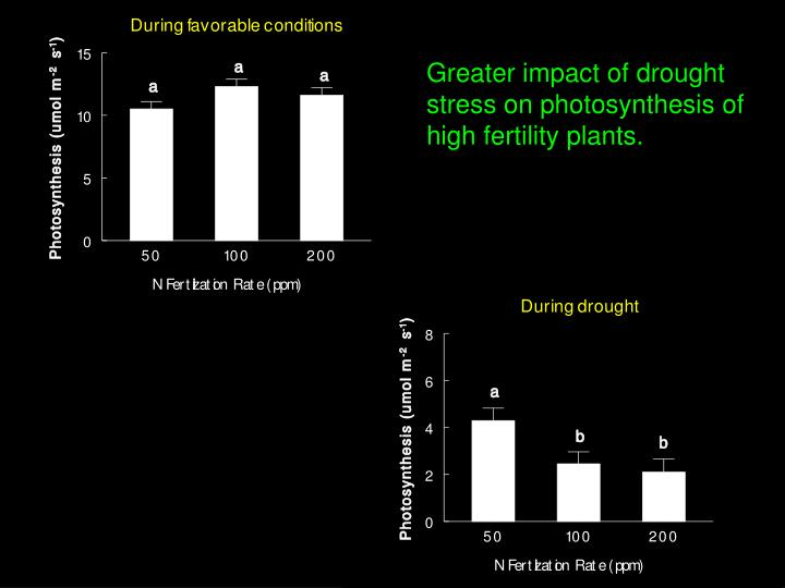 Greater impact of drought stress on photosynthesis of high fertility plants.