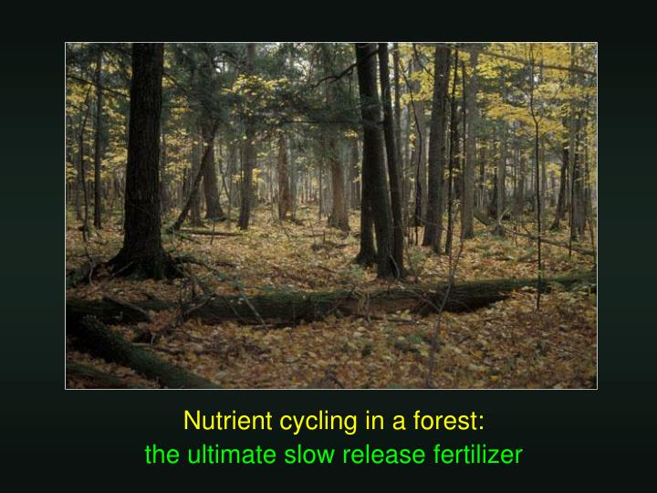 Nutrient cycling in a forest:
