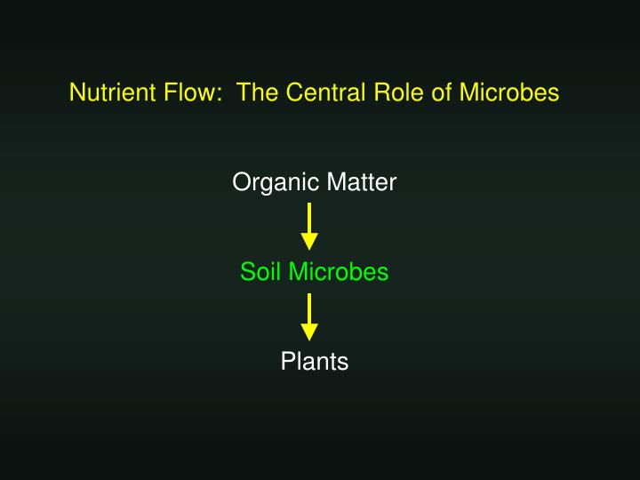 Nutrient Flow:  The Central Role of Microbes