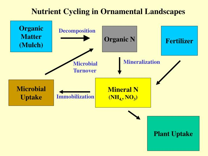 Nutrient Cycling in Ornamental Landscapes