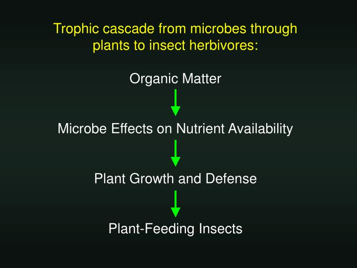 Trophic cascade from microbes through plants to insect herbivores: