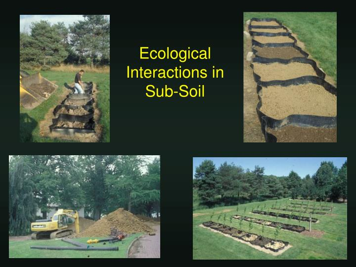 Ecological Interactions in Sub-Soil