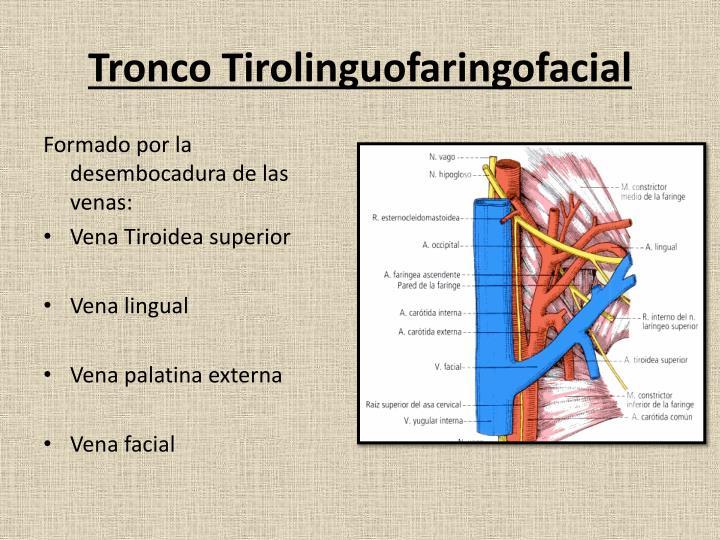 Tronco Tirolinguofaringofacial