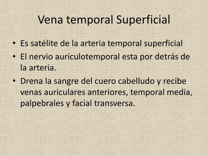 Vena temporal Superficial