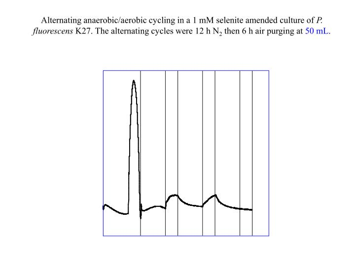 Alternating anaerobic/aerobic cycling in a 1 mM selenite amended culture of