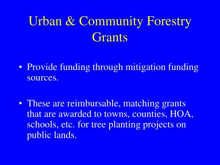 Urban & Community Forestry Grants