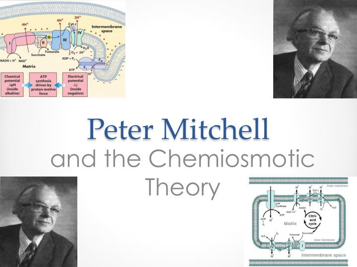 an analysis of the peter mitchells 1961 paper on the chemiosmotic hypothesis Stuck writing about a membrane models essays find thousands of free membrane models essays, term papers, research papers, book reports, essay topics, college essays.