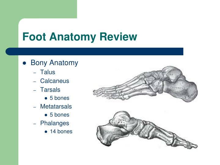 PPT - Foot and Ankle Seminar PowerPoint Presentation - ID:3024171