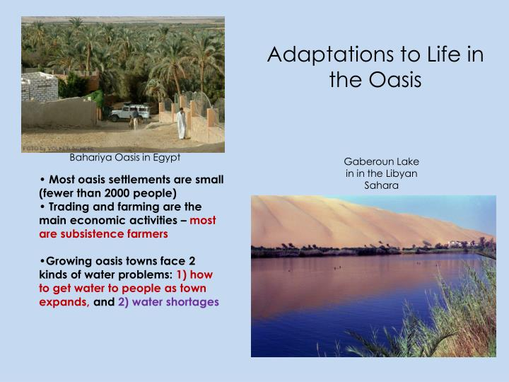Adaptations to Life in the Oasis