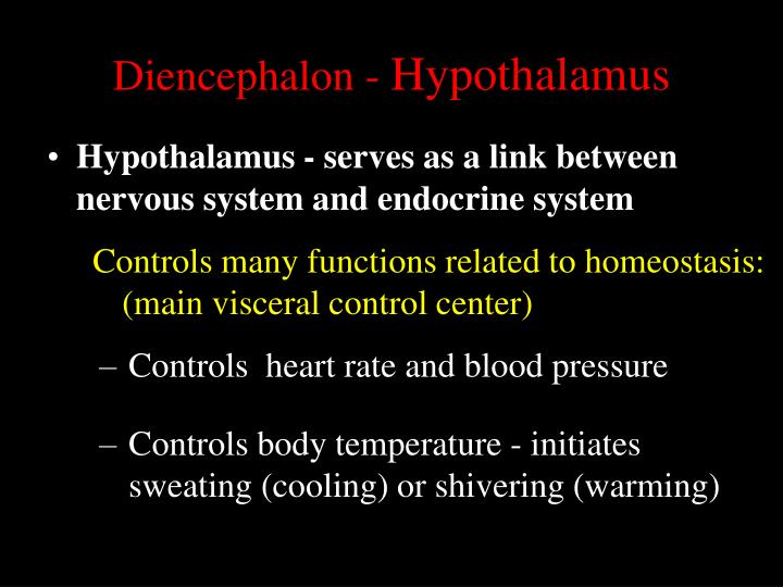 Diencephalon -