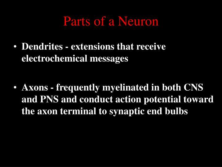 Parts of a Neuron