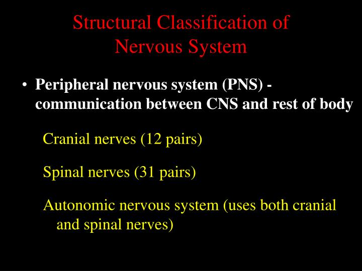 Structural classification of nervous system1
