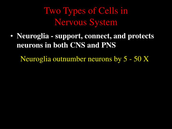Two Types of Cells in
