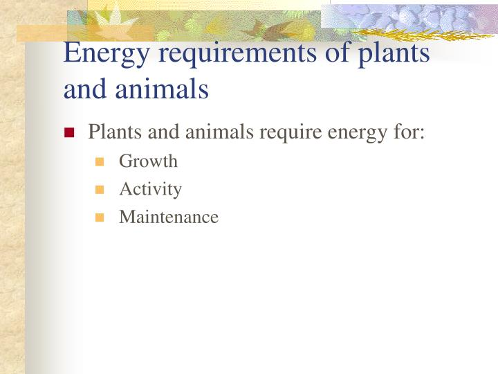 energy requirements of plants and animals n.