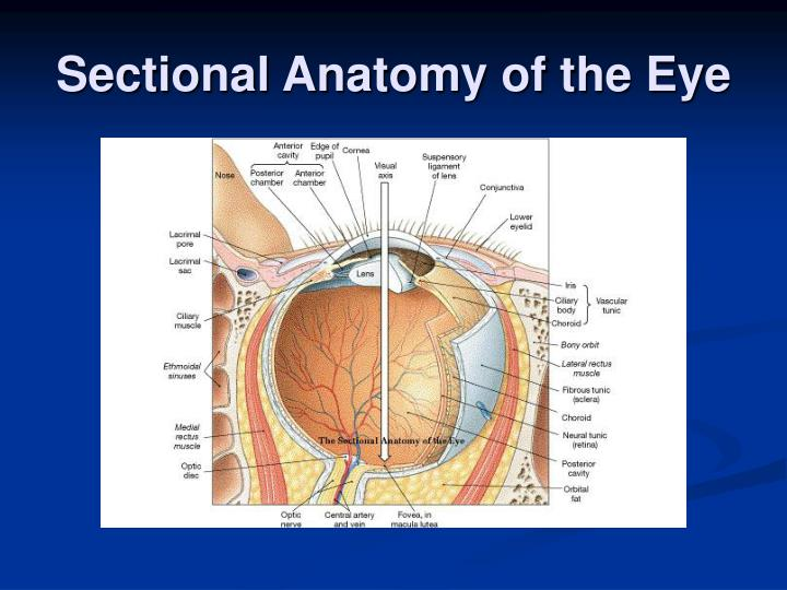 Ppt Anatomy And Physiology For Emergency Care Powerpoint