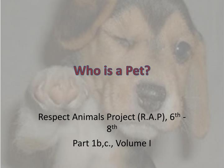 who is a pet n.