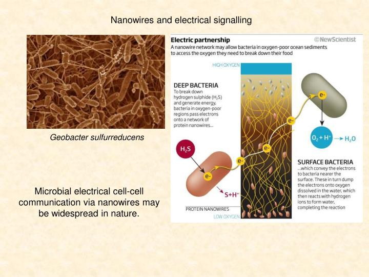electromagnetic signals from bacteria Electromagnetic radiation gamma rays kill bacteria and mould in food prolonging its infrared waves are also used as a source for carrier signals in fibre.
