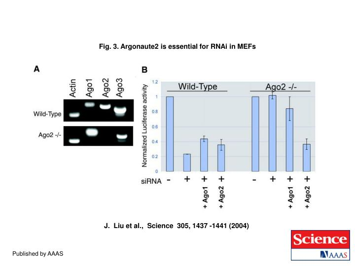 Fig. 3. Argonaute2 is essential for RNAi in MEFs