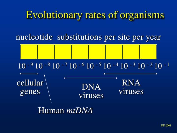 Evolutionary rates of organisms