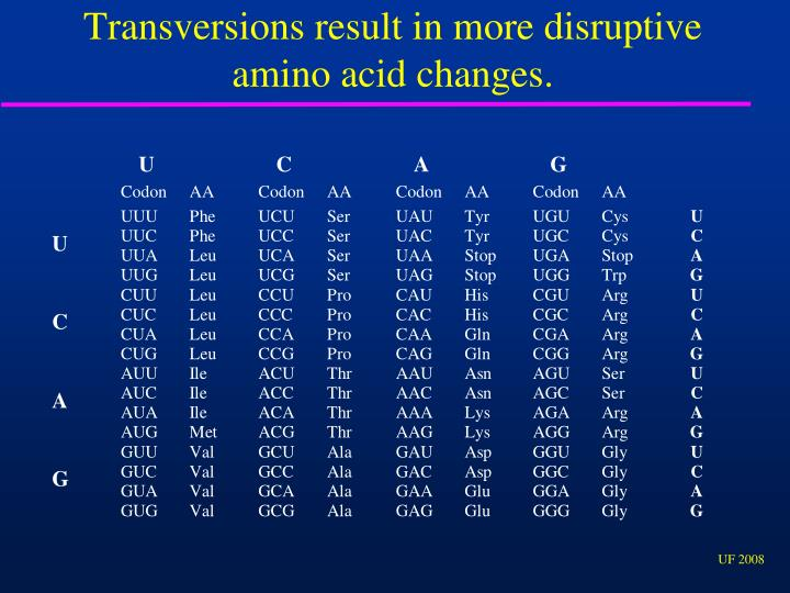 Transversions result in more disruptive amino acid changes.
