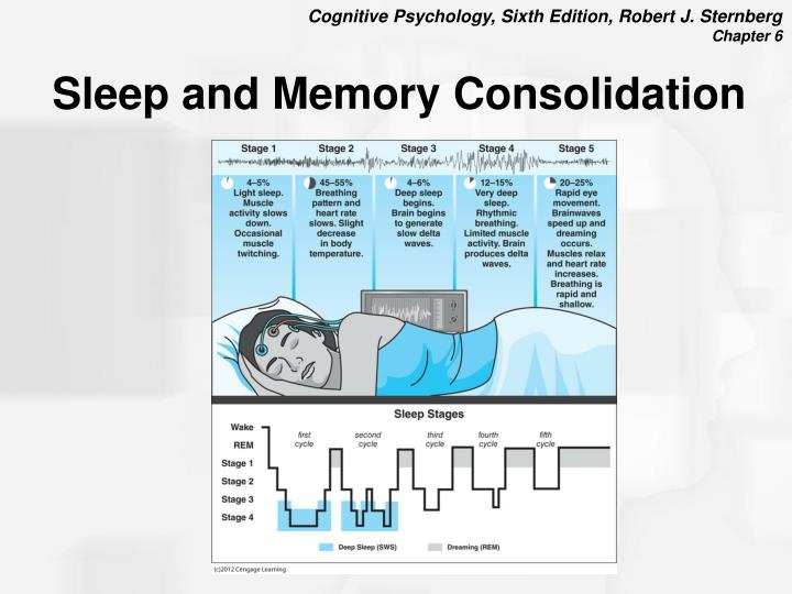 Sleep and Memory Consolidation