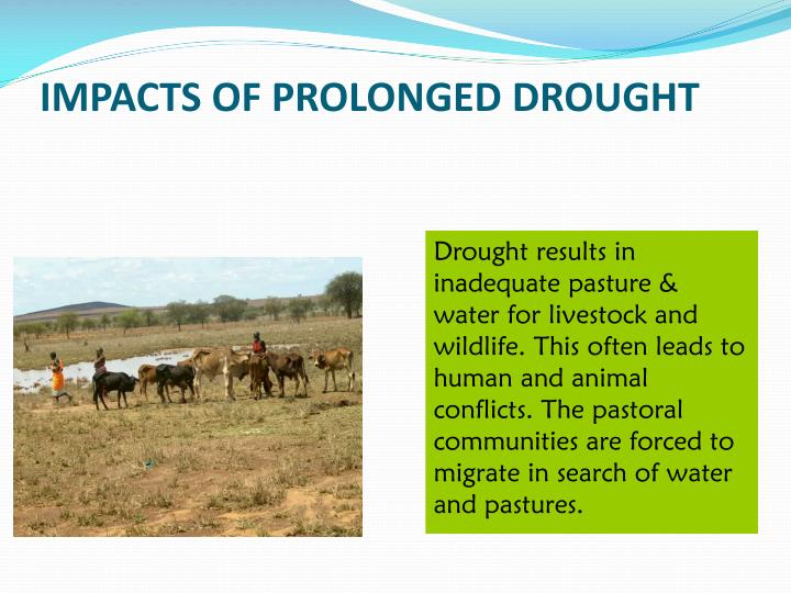 IMPACTS OF PROLONGED DROUGHT